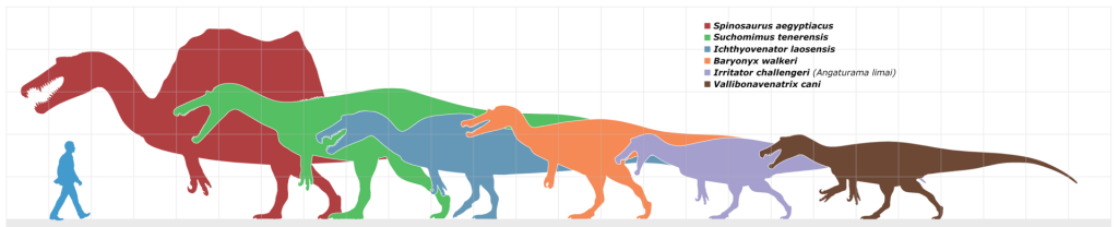 1920px-Spinosaur_scale_chart