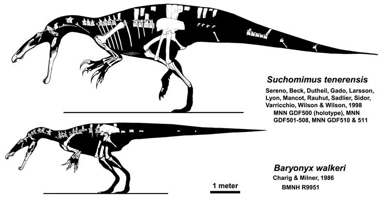 Suchomimus_and_Baryonyx