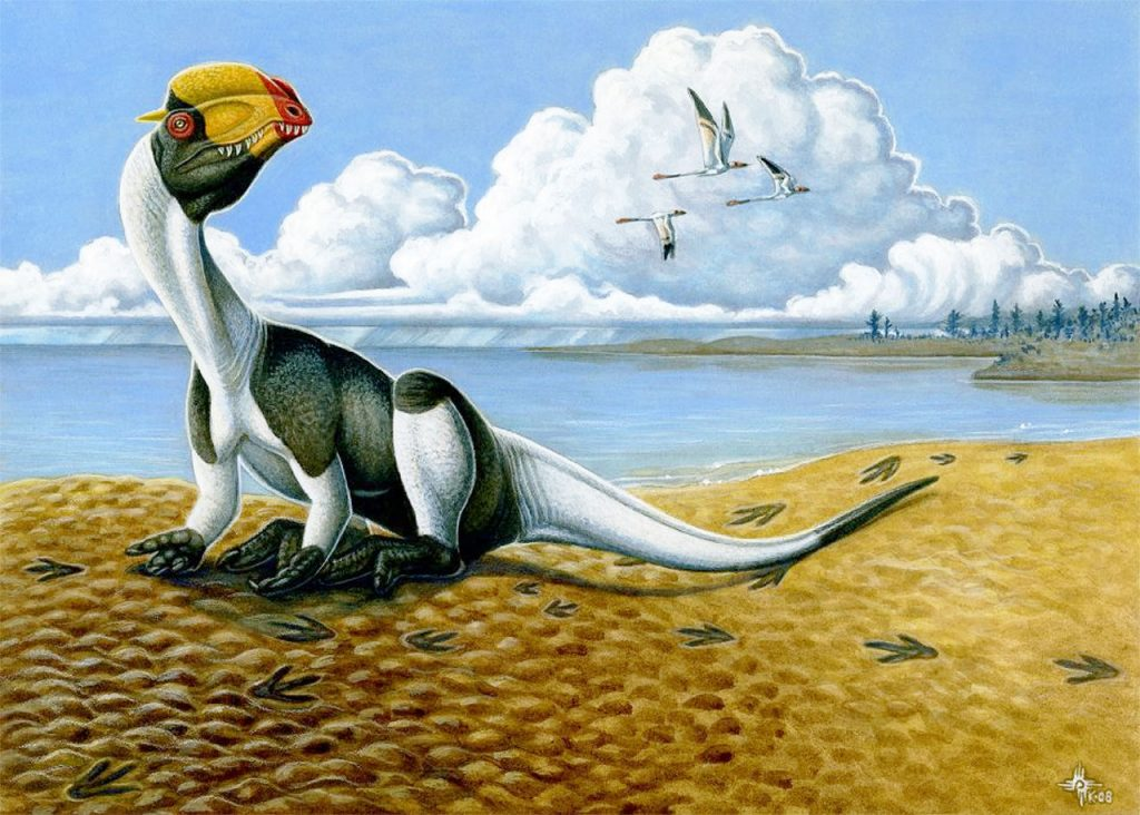 immagine Dilophosaurus_wetherilli